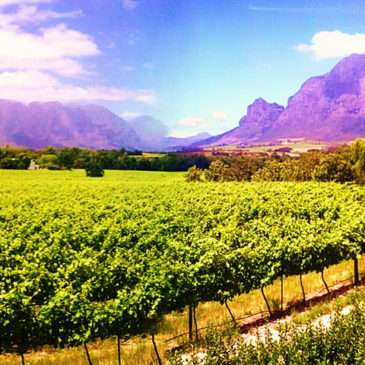 The Cape Winelands Tour – (Full Day)