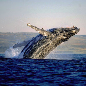 Whale Route Tours – (Full Day)